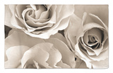 Three White Roses Rug by Robert Cattan