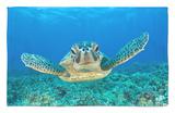 Green Turtle (Chelonia Mydas), Maui, Hawaii, USA Rug by Reinhard Dirscherl