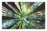 Arboleda Redwood Alfombrilla por Douglas Steakley