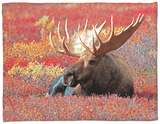 Bull Moose in Denali National Park, Alaska, USA Fleece Blanket by Dee Ann Pederson