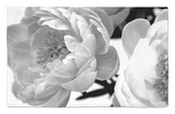 Delicate Blossom Rug by Nicole Katano