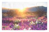 Flores silvestres al atardecer, Parque estatal Anza-Borrego, California Alfombrilla por Christopher Talbot Frank