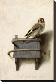 The Goldfinch, 1654 Stretched Canvas Print by Carel Fabritius
