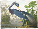 "Louisiana Heron from ""Birds of America"" Fleece Blanket by John James Audubon"