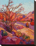 Ocotillo Shadow Stretched Canvas Print by Erin Hanson