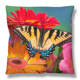 Eastern Tiger Swallowtail Female on Gerber Daisies, Sammamish, Washington, USA Throw Pillow by Darrell Gulin