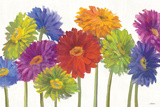 Colorful Gerbera Daisies Poster by Carol Rowan