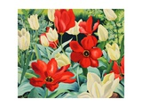 Early Tulips Giclee Print by Christopher Ryland