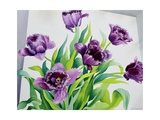 Purple Fringe Tulips Giclee Print by Christopher Ryland
