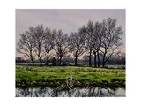 Winter Trees Giclee Print by Christopher Ryland