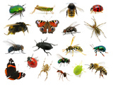 Set of Insects on White Photographic Print by  Ale-ks