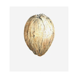 Coconut, 2015 Giclee Print by Lincoln Seligman