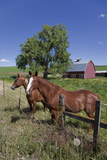 Near Pullman, Washington, Palouse Country, Horses and Red Barn Stampa fotografica di Charles Cecil