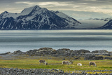 Reindeer in Svalbard,Norway Photographic Print by Art Wolfe
