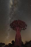 Quiver Tree, Namibia 2 Fotografisk tryk af Art Wolfe