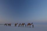 Camel Train, India Photographic Print by Art Wolfe