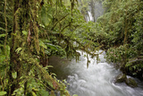 View in La Paz Waterfall Gardens Nature Park. Vara Blanca, Costa Rica Photographic Print by Thomas Wiewandt