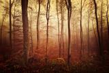 Autumn gradation Fotografie-Druck von Philippe Sainte-Laudy