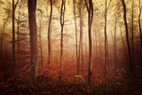 Autumn gradation Photographic Print by Philippe Sainte-Laudy