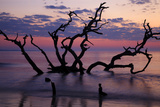 USA, Georgia, Jekyll Island, Driftwood Beach at Sunrise Photographic Print by Joanne Wells