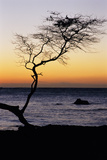 USA, Hawaii. Tree Silhouette at Twilight Photographic Print by Jaynes Gallery