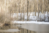 Multiple Exposure of Trees in Winter, Eagle Creek Park, Indiana Photographic Print by Rona Schwarz