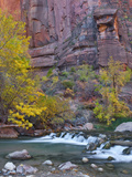 USA, Utah, Zion National Park. the Narrows with Cottonwood Trees in Autumn Photographic Print by Jaynes Gallery