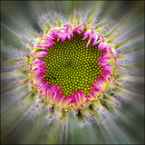 Raidiance of Nature Photographic Print by Adrian Campfield