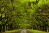 USA, Georgia, Savannah, Drive at Historic Wormsloe Plantation Photographic Print by Joanne Wells