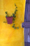 Mexico, San Miguel De Allende. Planted Pot on Wall Photographic Print by Jaynes Gallery