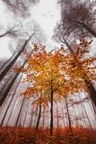 Autumnal tints Reproduction photographique par Philippe Sainte-Laudy