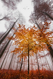 Autumnal tints Fotografie-Druck von Philippe Sainte-Laudy