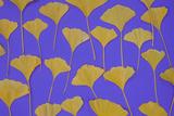 Art Wolfe - Seattle Ginko Fotografická reprodukce