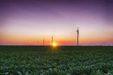 USA, Indiana. Soybean Field and Wind Farm at Sundown Photographic Print by Rona Schwarz