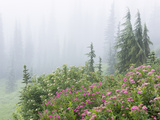 Washington, Mount Rainier National Park. Wildflowers in Misty Forest Photographic Print by Jaynes Gallery