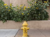 USA, New Mexico, Santa Fe. Fire Hydrant Downton Santa Fe, New Mexico Photographic Print by Luc Novovitch