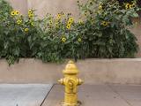 USA, New Mexico, Santa Fe. Fire Hydrant Downton Santa Fe, New Mexico Photographic Print by Luc Novovitch