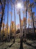 Utah, Manti La Sal Nf. Autumn Colors of Aspen Trees Photographic Print by Christopher Talbot Frank
