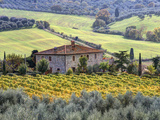 Italy, Tuscany. Vineyards and Olive Trees in Autumn by a House Photographic Print by Julie Eggers