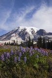 Mount Rainier National Park, Wildflowers Photographic Print by Ken Archer