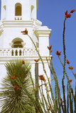 Ocotillo Blooming at San Xavier Del Bac Mission, Tucson, Arizona Photographic Print by Thomas Wiewandt