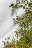 Washington, Mount Rainier National Park. Flowers and Waterfall in Paradise Creek Photographic Print by Jaynes Gallery