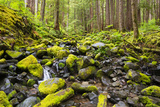 Wa, Olympic National Park, Sol Duc Valley, Stream with Mossy Rocks Photographic Print by Jamie And Judy Wild