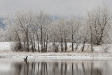 USA, Colorado, Boulder. Canadian Geese Taking Flight from Water Photographic Print by Jaynes Gallery