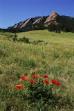 USA, Colorado, Boulder. Flatirons and Poppies at Chautauqua Park Photographic Print by Jaynes Gallery