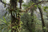 Tropical Plants in Monteverde Cloud Forest, Costa Rica Photographic Print by Thomas Wiewandt