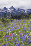 Mount Rainier National Park, Tatoosh Mountains Photographic Print by Ken Archer