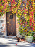 Italy, Tuscany, Contignano. a Wooden Door Surrounded by Fall and Cat Photographic Print by Julie Eggers