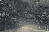 Georgia, Savannah, Wormsloe State Historic Site, Live Oak Avenue Photographic Print by Walter Bibikow