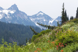 Washington, Mount Rainier National Park. Alpine Meadow and the Tatoosh Range Photographic Print by Jaynes Gallery